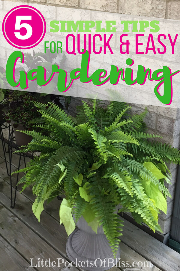 5 simple tips for quick and easy gardening