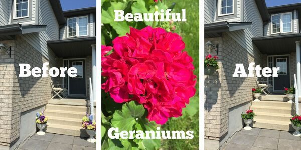 Front Porch Before and After Geranium Pots