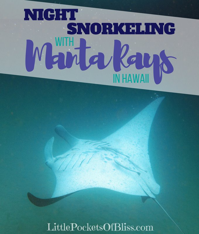 night snorkeling with manta rays in hawaii